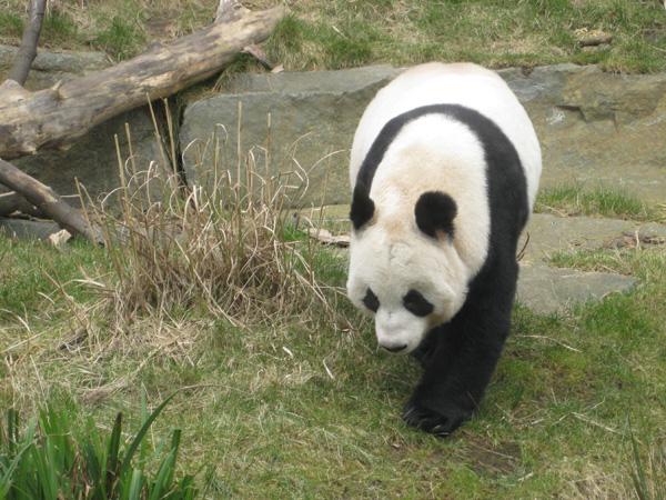 Tian Tian 2