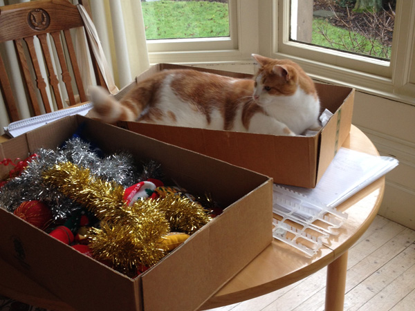 Phoebus and the decorations