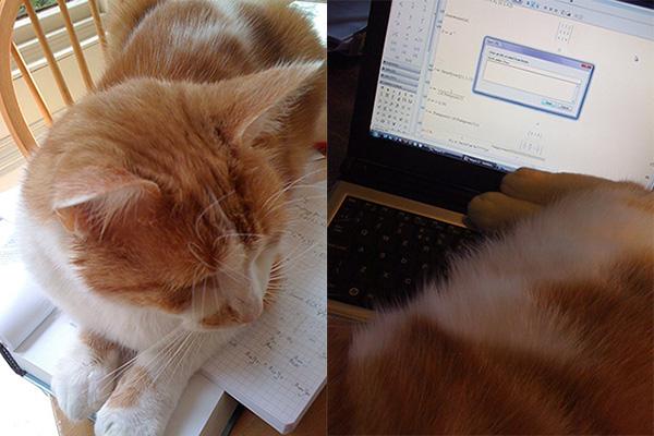 Phoebus on my work