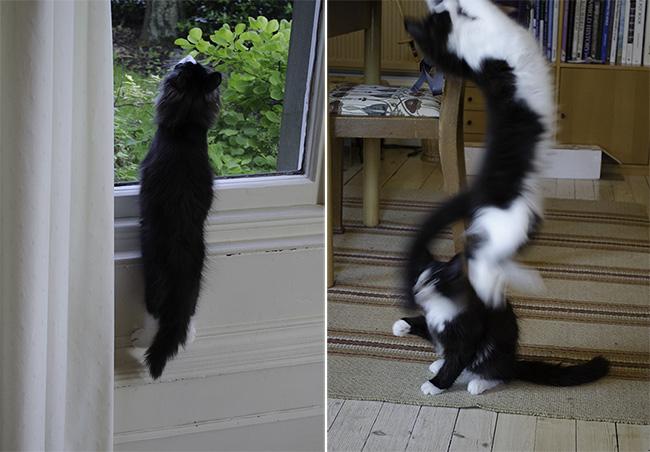 super kittens