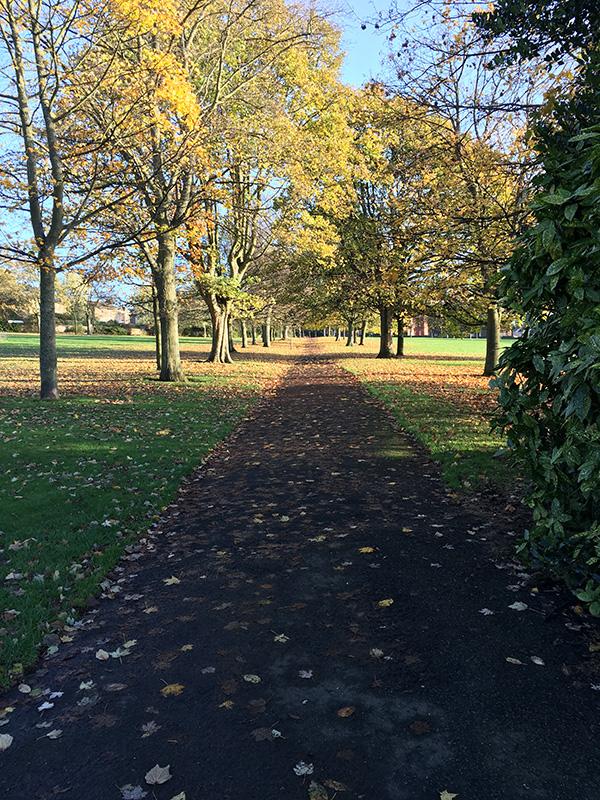 Park in November 2015