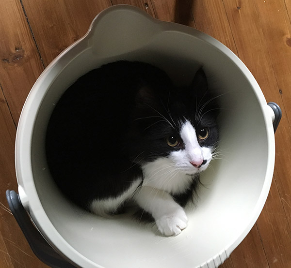 Pippi in a bucket
