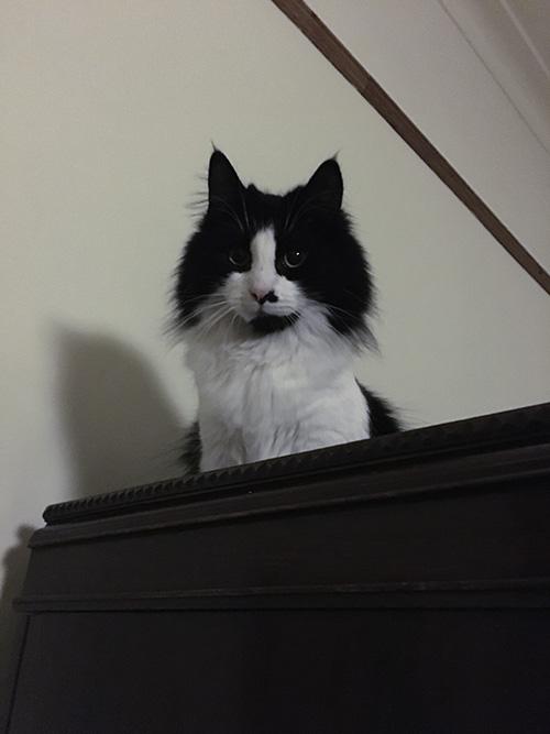 Pippi on the wardrobe